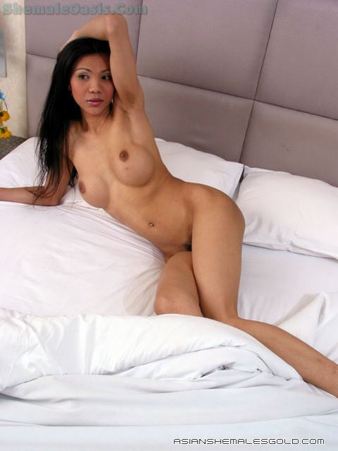 Busty Thai Transexual