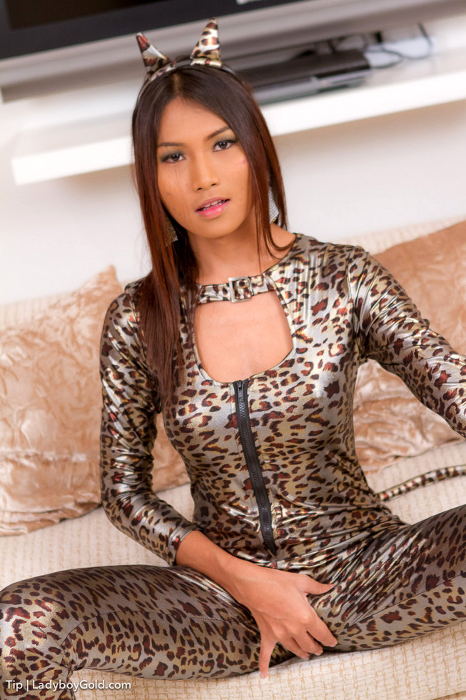 Pattaya Shemale Tip - Tip Cat Suit Seduction