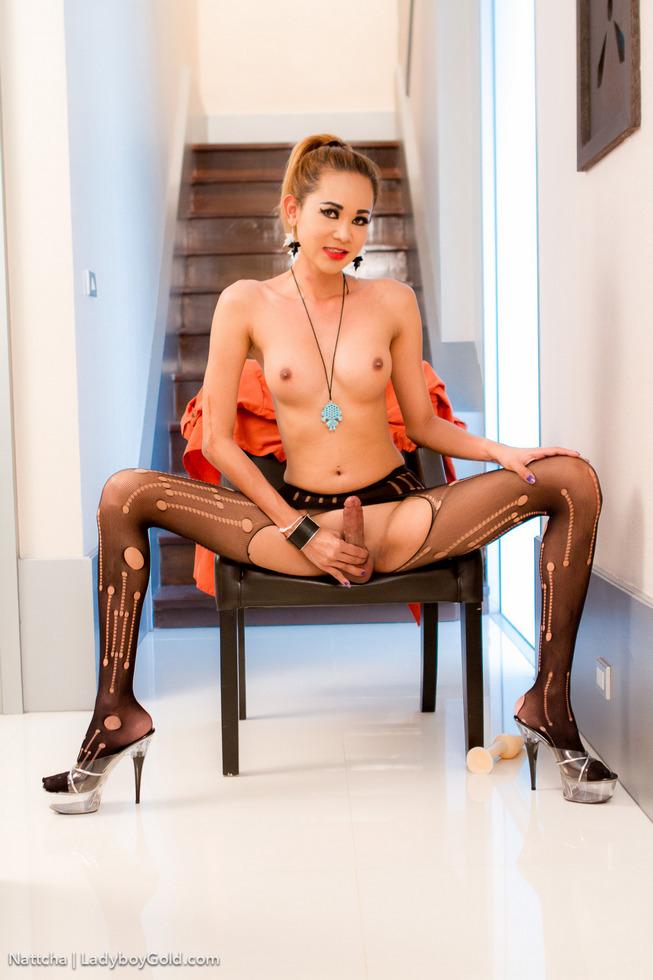 Pattaya T-Girl Nattcha