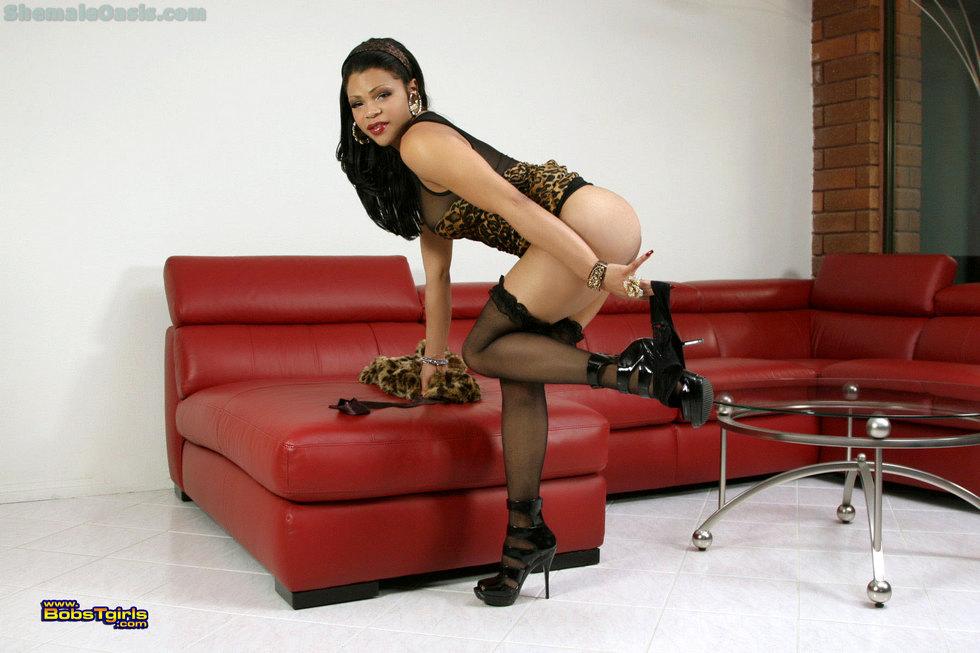 T-Girl Sheeba Starr